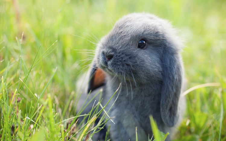 Keep Your Eyes Open For Baby Rabbits Andy Law Pest Control