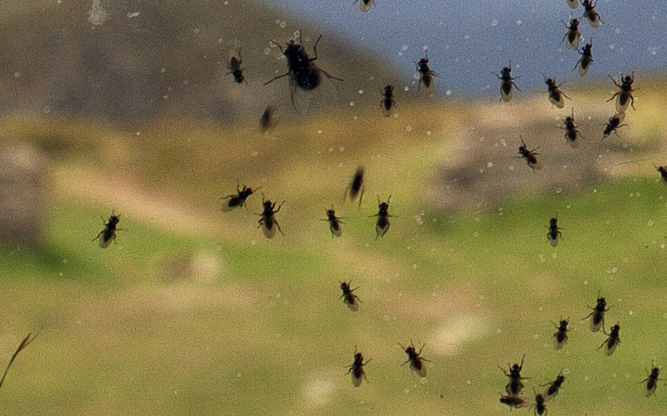 Do Insects Die Off In Cold Winter Weather Andy Law Pest