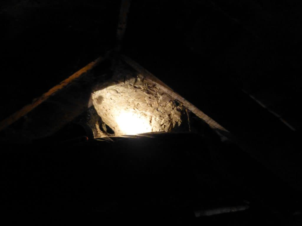 A-large-wasp-nest-seen-by-torchlight-in-an-attic - Andy ...