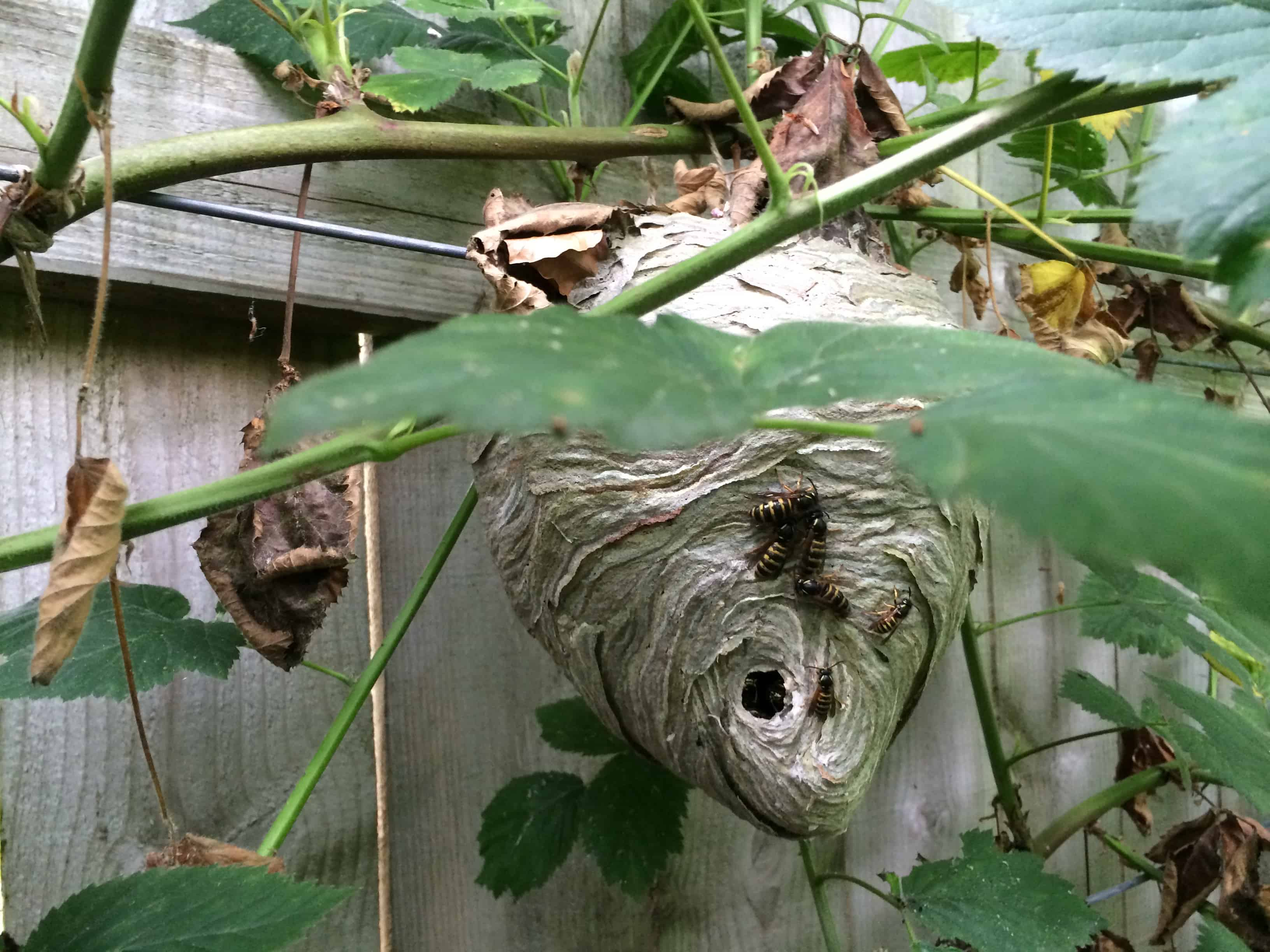 What Does A Wasp Nest Look Like & How Do You Spot Them ...