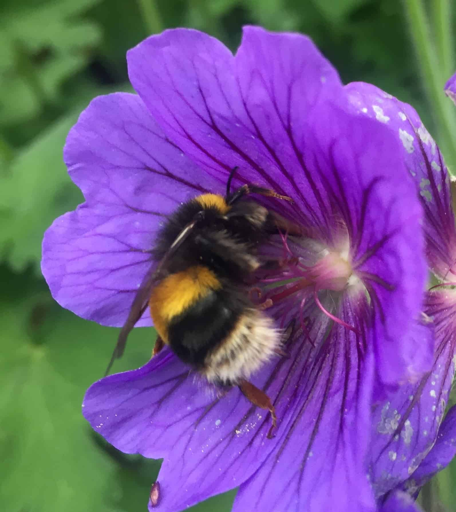 Bee Gallery Andy Law Pest Control