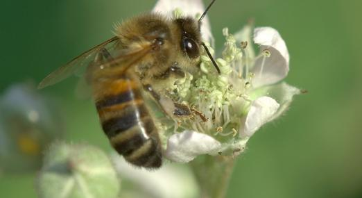 Buzzing Insects Andy Law Pest Control