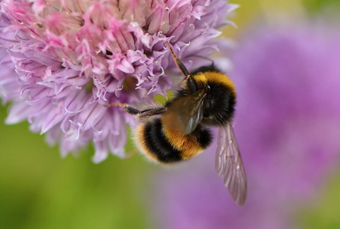 bee gallery
