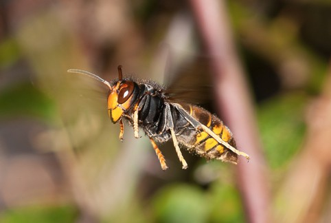 buzzing-insects-gallery