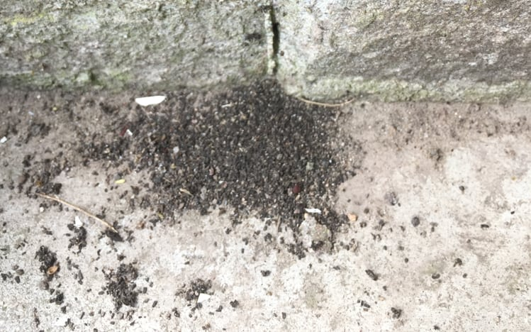 Swarms Of Flying Ants Andy Law Pest Control