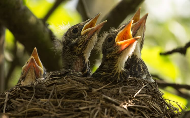 Think Ahead Be Prepared For Nesting Season Andy Law