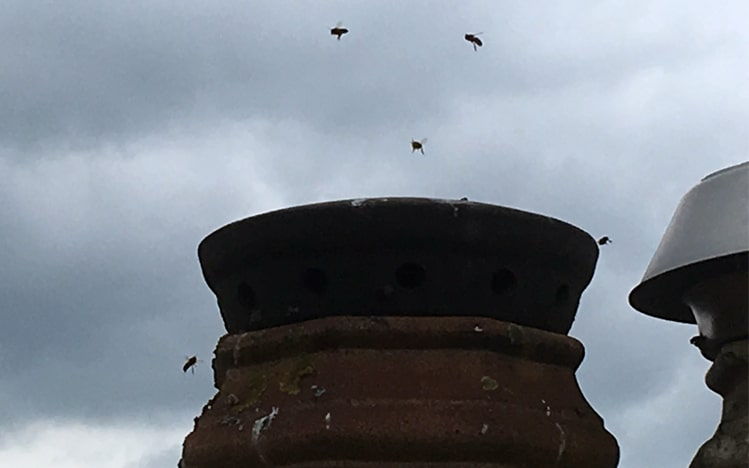 swarms of bees