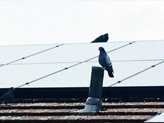 dundee solar panel bird proofing