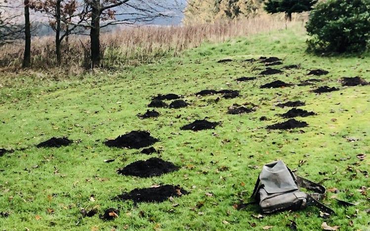 Mole pest removal for Perth